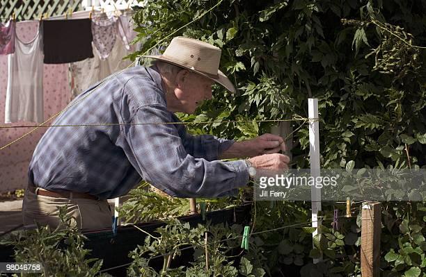 Elderly man in the garden