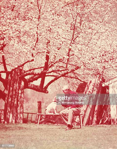 elderly man sitting on bench, under blossoming tree, with beagle dog. (photo by h. armstrong roberts/retrofile/getty images) - un animal fotografías e imágenes de stock