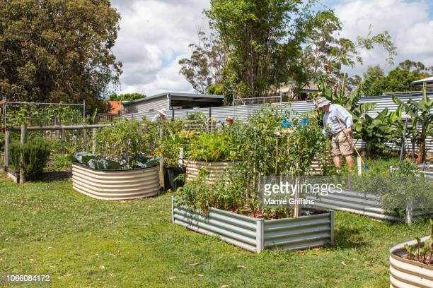 elderly man working in a community garden - wide shot stock pictures, royalty-free photos & images