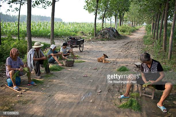 Elderly residents sit in the shade and clean vegetables at a rural village near Fuyang Anhui Province China on 28 August 2013 As ablebodied adults...