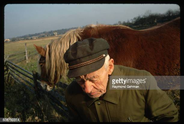 elderly veteran with horse - bialowieza forest stock pictures, royalty-free photos & images