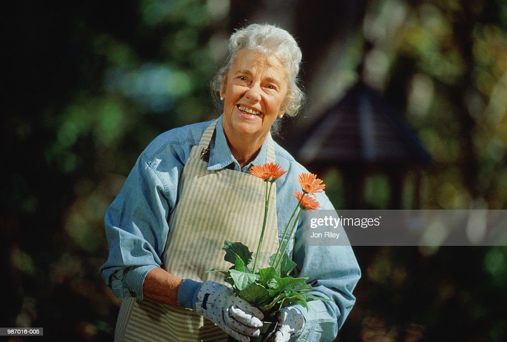 1ffa5850 Elderly Woman Holding Pot Of Gerber Daisies In Garden Stock Photo ...