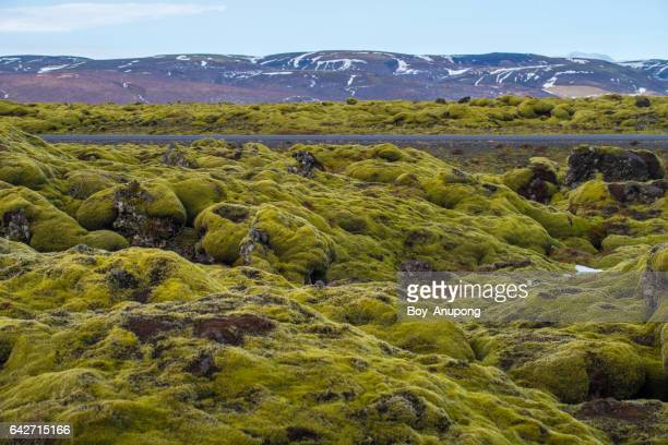 Eldhraun lava field along the 'Ring Road' in Iceland.