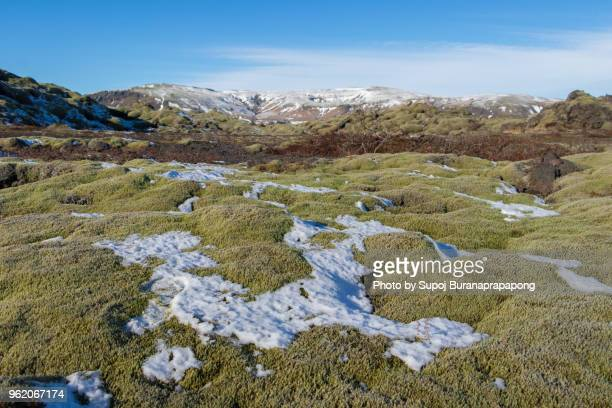 eldhraun lava field in the south of the icelandic highlands is the biggest lava flow in the world - lava plain stock pictures, royalty-free photos & images