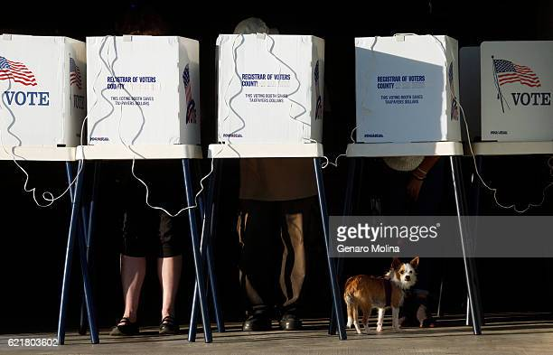 LOS ANGELES CA NOVEMBER 5 2016 Eleanor Roosevelt rests below voting booths as people cast their votes at the Los Angeles County Fire Department...