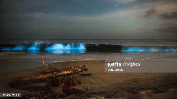 electric blue bioluminescence in ocean surf at night, salt creek, dana point, california, usa - plankton stock pictures, royalty-free photos & images