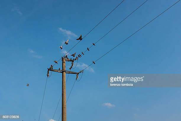 electric pole with pigeons