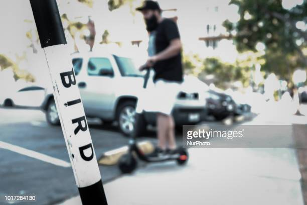 Electric scooter application BIRD Scooters are now available throughout Southern California and have come increasing popular in San Diego