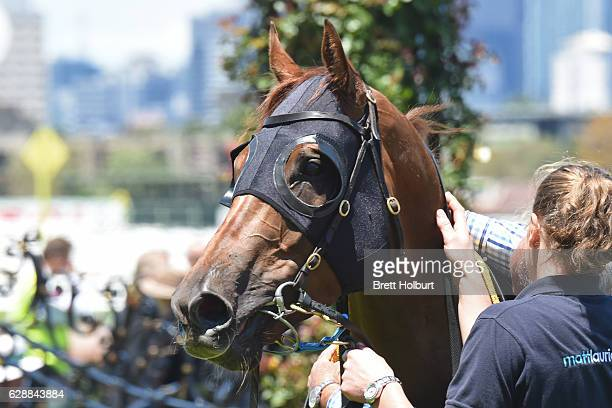 Electric Tribute after winning Café Adamo Handicap at Flemington Racecourse on December 10 2016 in Flemington Australia