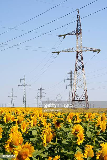 電気 pylons とヒマワリのフィールド