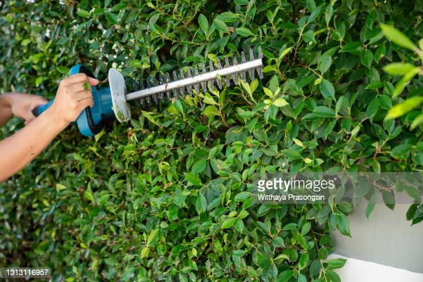 electricity garden scissors trimming green hedges work in the garden - cutting stock pictures, royalty-free photos & images