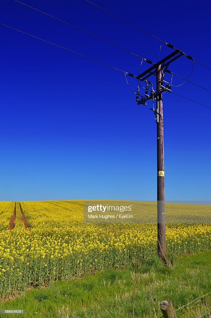 Electricity Pylon On Rapeseed Field Against Clear Blue Sky : Stock Photo