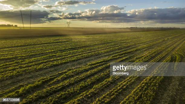 Electricity transmission towers stand next to a corn field in this aerial photograph taken over a farm in Rosario Bahia state Brazil on Tuesday May 8...