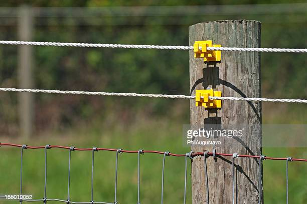 Electrified wires on pasture fence