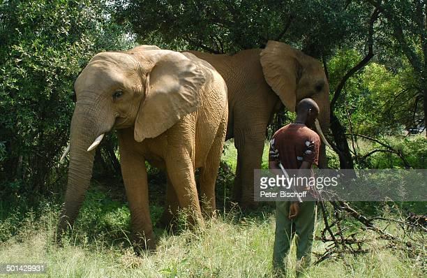 Elefanten Glen Afric Country Lodge Hartbeespoort bei Pretoria Südafrika Afrika Tier Reise BB DIG PNr 240/2006