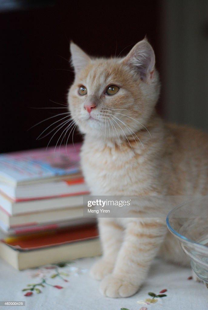 Elegant cat and books : Stock Photo