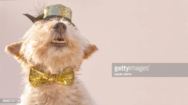 Elegant dog
