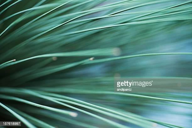 Elegant green lines of a succulent plant