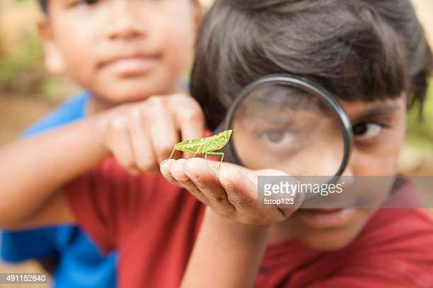 elementary age boy enjoys discovering nature. magnifying glass. insect. - insect stock pictures, royalty-free photos & images