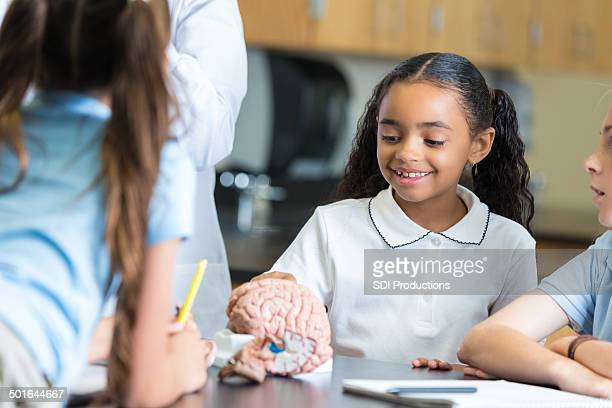 Elementary private school students studying brain model in science class