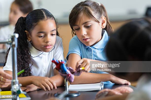 Elementary school girls studying heart model in science class