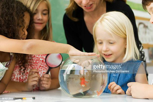 elementary teacher and students gathered around goldfish bowl, one girl sticking finger in water - teacher bending over stock photos and pictures