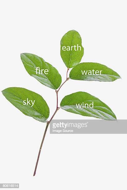 Elementos de hojas