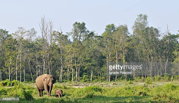 Elephant and baby in Royal Chitwan National park