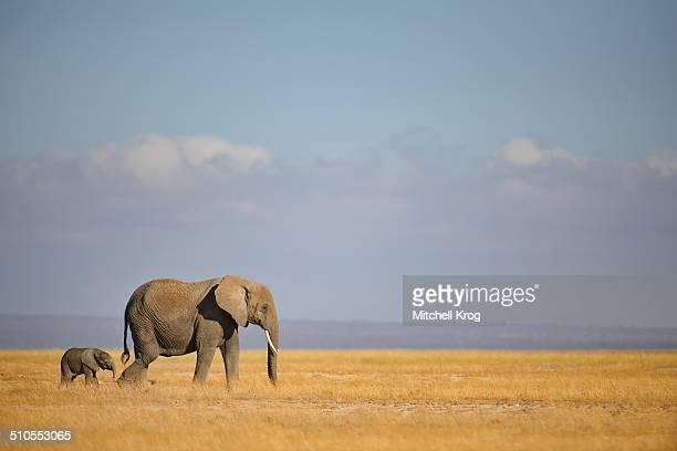 Elephant and Calf at Amboseli, Kenya