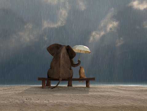 elephant and dog sit under the rain 160887834