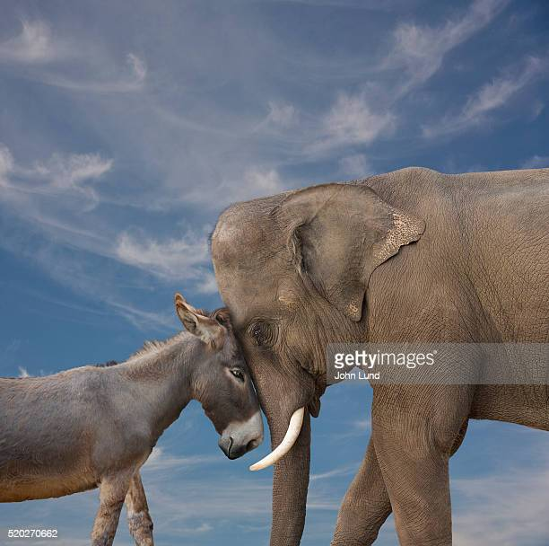 elephant and donkey touching faces together - john lund stock pictures, royalty-free photos & images