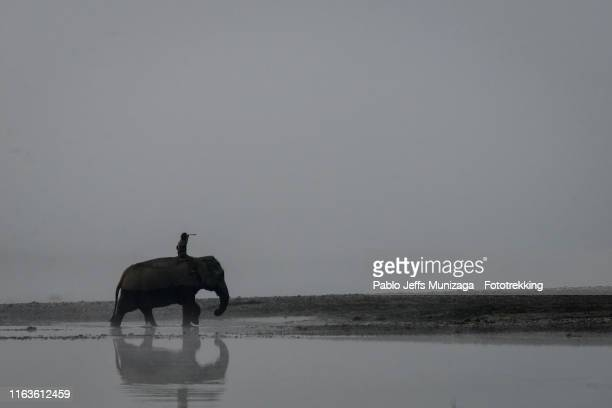 elephant and mahout crosses the river - chitwan stock pictures, royalty-free photos & images