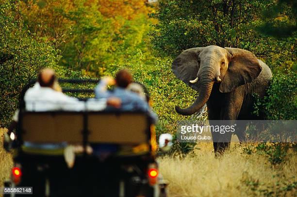 Elephant and Tourists