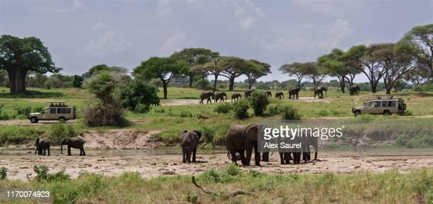elephant around tourist safari cars, tarangire national park, tanzania - tarangire national park stock pictures, royalty-free photos & images