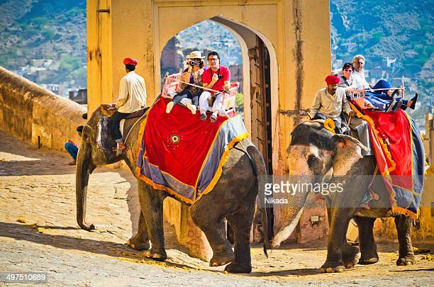 elephant at amber fort - ceremony stock pictures, royalty-free photos & images
