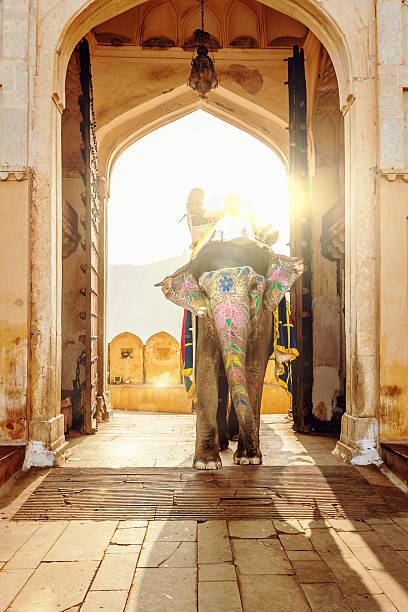 """""""Elephant at Amber Palace Jaipur,India"""""""