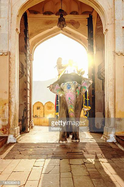 Elephant at Amber Palace Jaipur,India