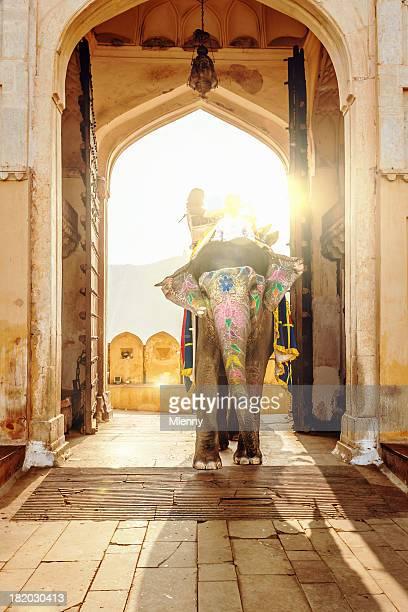 象に琥珀色の宮殿ジャイプール(インド)