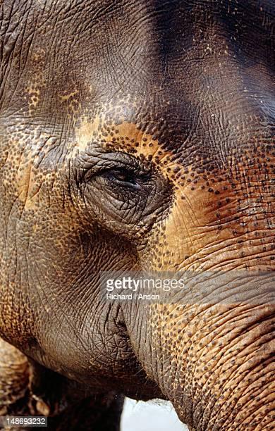 Elephant at Island Jungle Lodge.