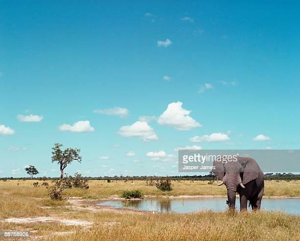 Elephant at Savute Lodge, Botswana