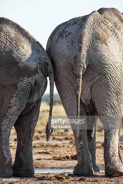 mans-head-in-elephants-butt