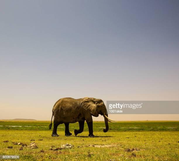 Elefanten bei Wild