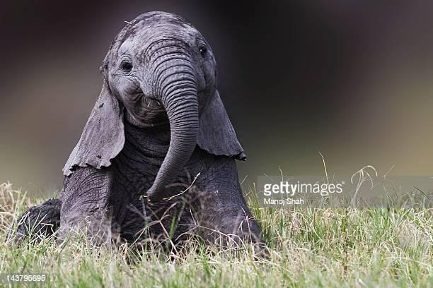 Elephant Baby playing