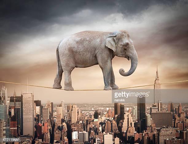 Elefant und balancierst auf dem Seil