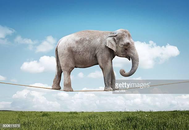 Elefante equilíbrio na Corda
