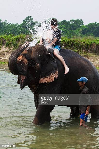 elephant bathing - big nose stock photos and pictures