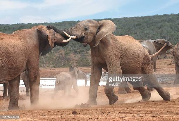 elephant battle