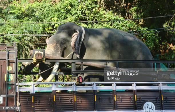 Elephant being transported by truck in Peerumade Idukki Kerala India