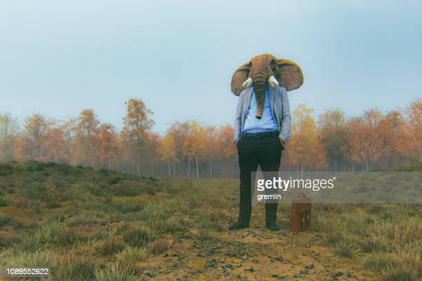 elephant businessman standing in the meadow - satire stock pictures, royalty-free photos & images