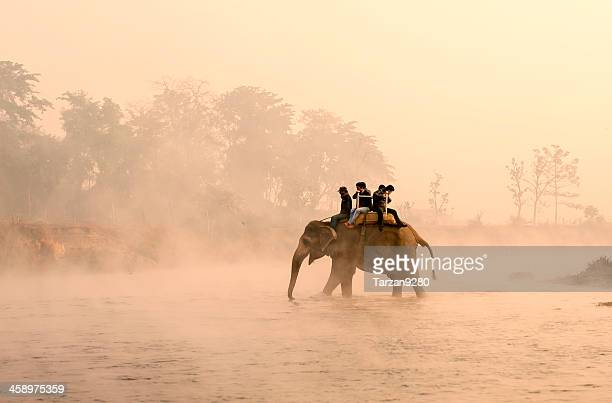elephant carrying tourists walking into river in misty morning, nepal - chitwan stock pictures, royalty-free photos & images